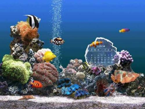 SereneScreen Marine Aquarium 3.0 � Descarregar, Download, Baixar 3.0